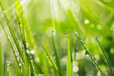 Bioenergetisches Heilen